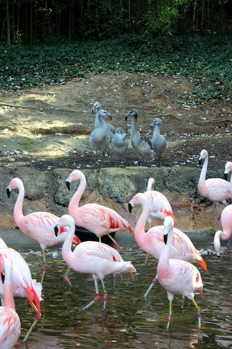 Zoo atlanta coupon code 2019