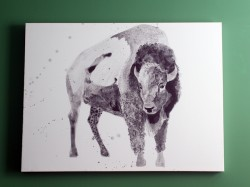 bison03s